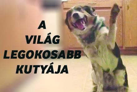 Jumpy a világ legokosabb kutyája