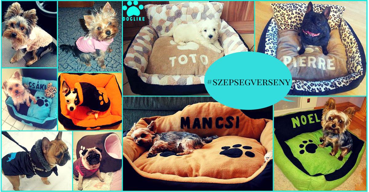 Kutyaszépségverseny Instagramon