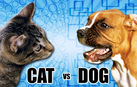 Kutyák a cicák ellen