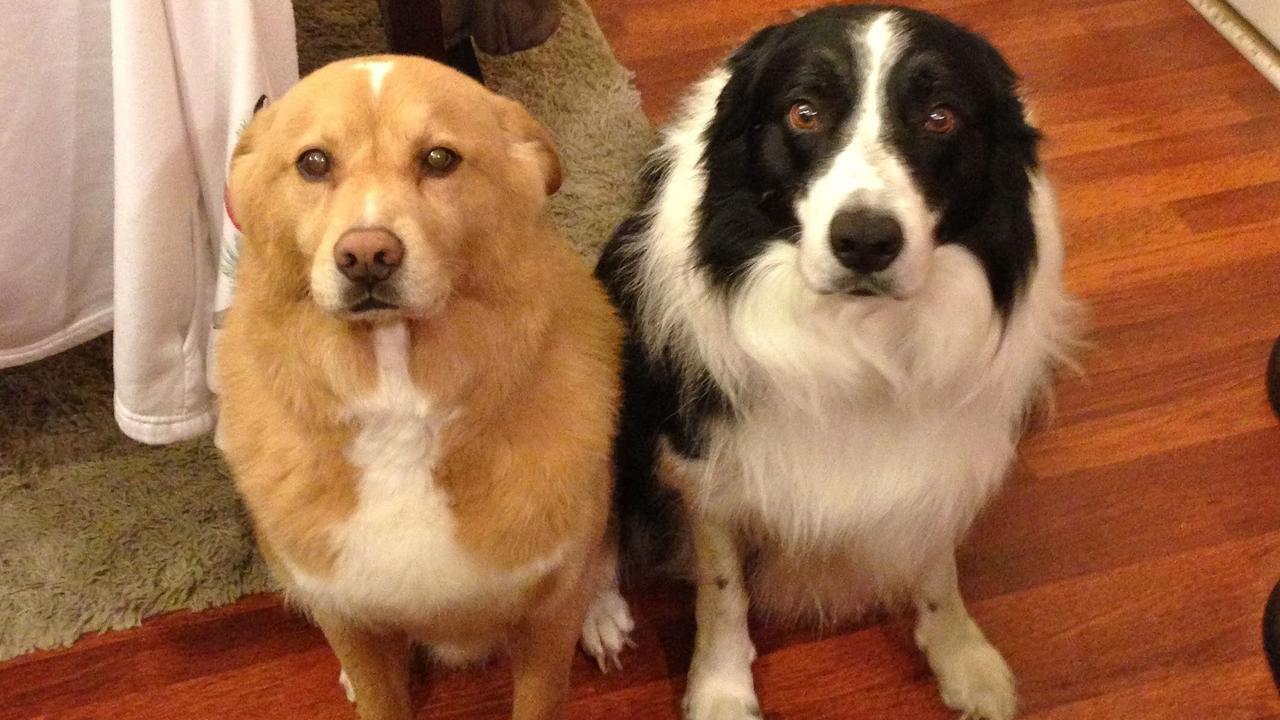 Így viselkednek a kutyusok mikor bűntudatuk van