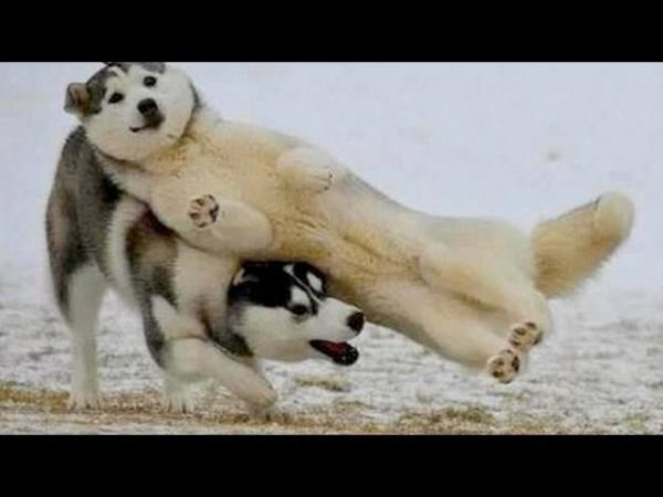 A legcukibb kiskutyás videó válogatás