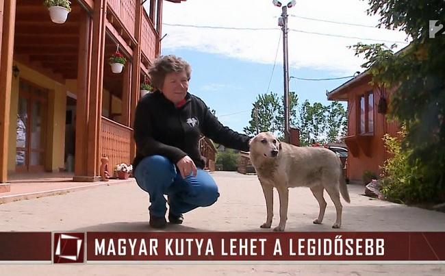 Magyar lehet a világ legidősebb kutyusa [VIDEO]